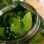Vantagens de consumir folhas de louro: ajuda a combater a insônia, diabetes e hipertensão