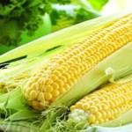 12 motivos para comer mais milho verde