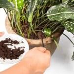 Com estes 6 ingredientes naturais, suas plantas sem vida voltarão a florescer