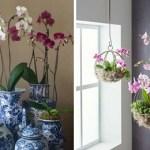 Cultive orquídeas em casa com apenas 3 passos