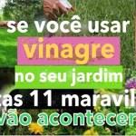 11 usos interessantes do vinagre em seu jardim, que talvez não conhecia