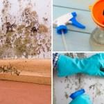 Como se livrar do mofo naturalmente