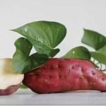 7 benefícios das folhas da batata-doce que talvez não conheça