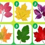 Teste: Escolha uma folha e veja o que sua cor diz sobre sua personalidade
