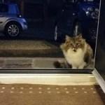 Esta gatinha implora para entrar no calor – o homem abre a porta, mas ela não está sozinha