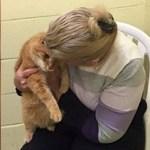 Mulher adota gato idoso, mas volta ao abrigo para adotar o melhor amigo dele também!