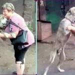 Mulher se derrete em lágrimas ao reencontrar seu cão roubado, em estado debilitado após 2 anos