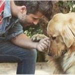 Bruno Gagliasso constrói casa de recuperação para animais