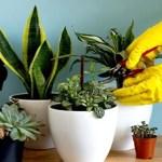 Estas são as razões para viver rodeada de plantas