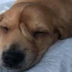 A maravilhosa história do cachorro que nasceu com um rabo na testa