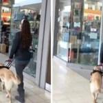 Cão-guia leva dona à loja de animais sem ela perceber sempre que vão ao shopping