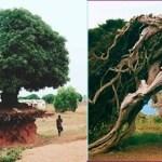 6 árvores que surpreendem a todos com sua vontade de viver