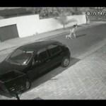 Advogada luta contra pitbull para defender cadela