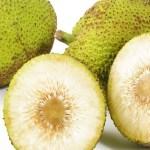 Fruta-Pão: reduz o colesterol, previne a anemia e muito mais
