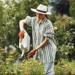 4 dicas para manter as plantas bonitas e saudáveis