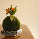 10 plantas deslumbrantes e estranhas para decorar interiores