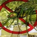 Fique livre dos mosquitos com estas 9 plantas