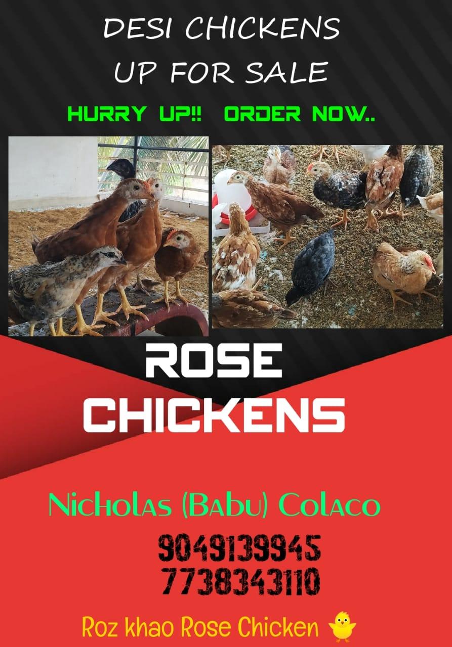 ROSE CHICKEN 🐥