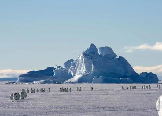manify-antartica-header