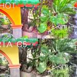 Lenovo Vibe Shot vs Sony Xperia C5 Ultra Camera Review Comparison Philippines