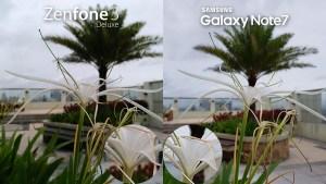 Asus Zenfone 3 Deluxe vs Samsung Galaxy Note 7 Camera Review Comparison HDR