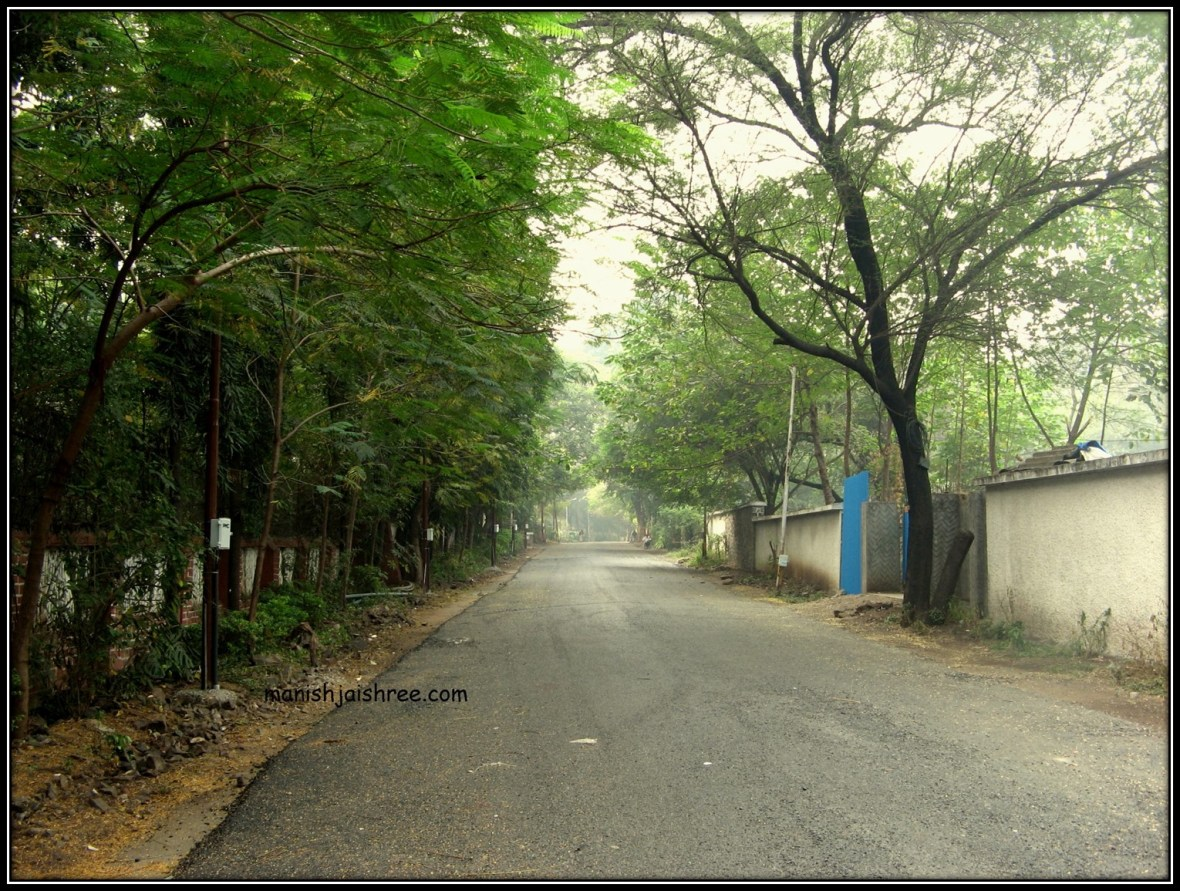 Green and clean Koregaon area