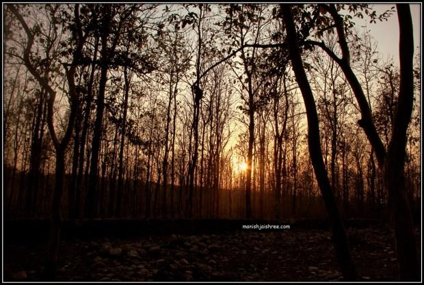 Entering Sitavani Jungles
