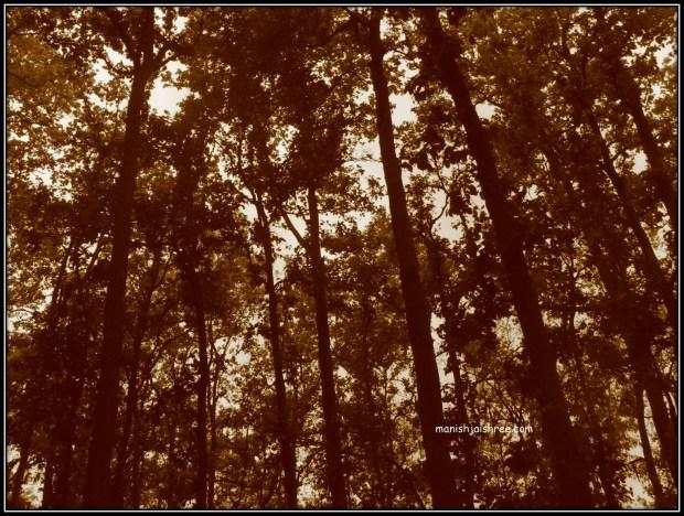 Sitavani ke Jungle