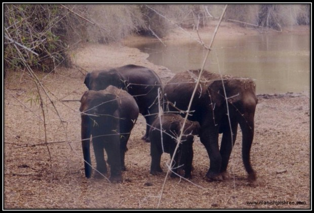 Elephant family in Bandipur