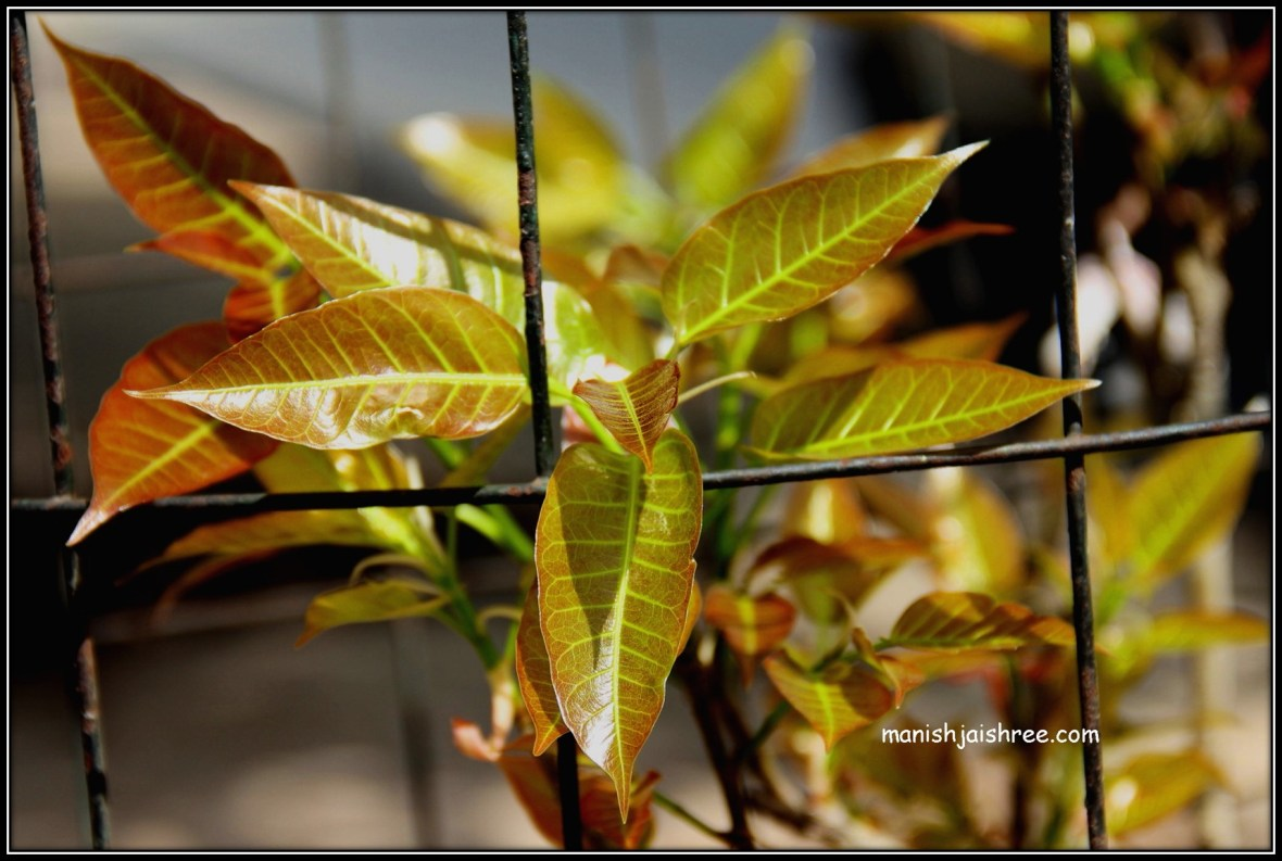 जाड़ी की पत्तियों पर छाया बसंत