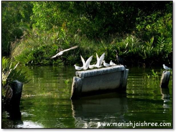 Birds at Munroe Island