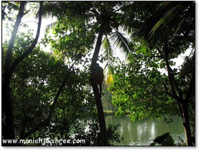 Coconut-water at Munroe island