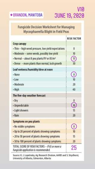 20200619_Justice pea fungicide check