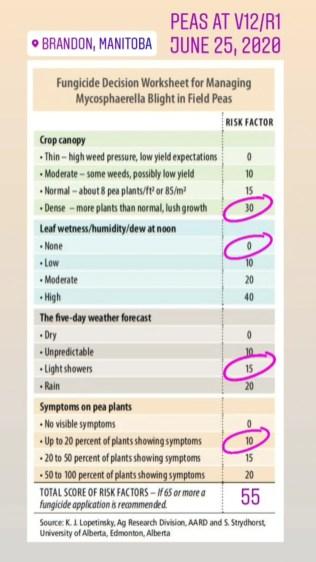 20200625_Justice pea fungicide check