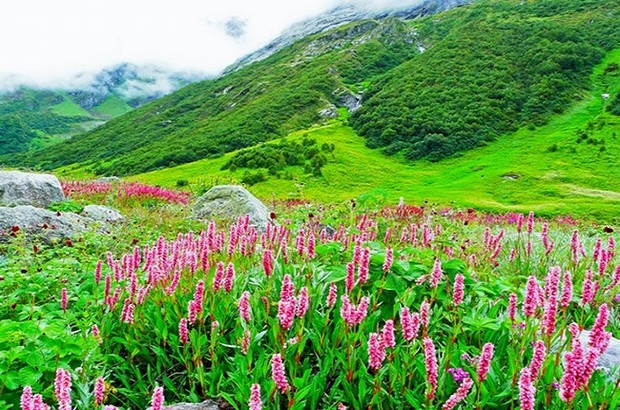 Valley of Flowers, Gio adventures, Cash karo, Red bus