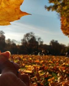 Cinquantenaire park of Brussels