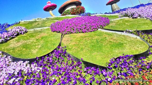 Floral arraagement, Dubai Miracle garden