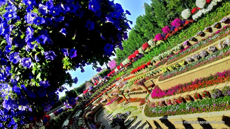 Flower Terraces, Dubai Miracle garden