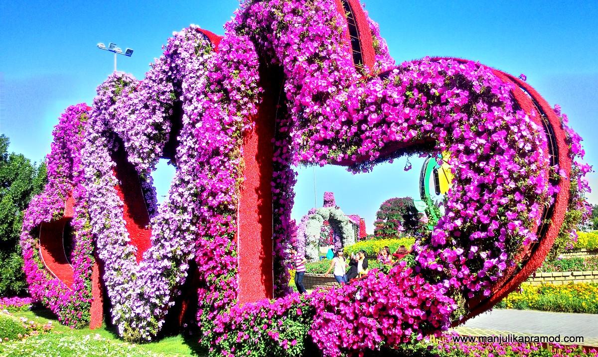 heart, flowers, dubai, miracle garden