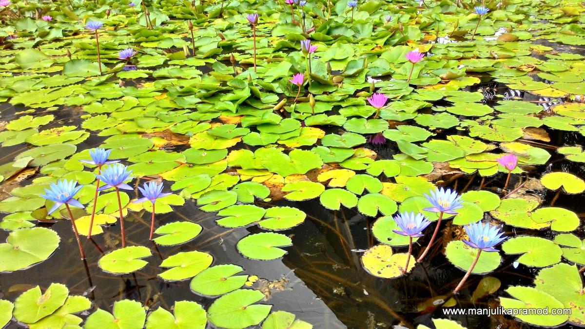 Travel, Singapore, Blogger, Green, Nature