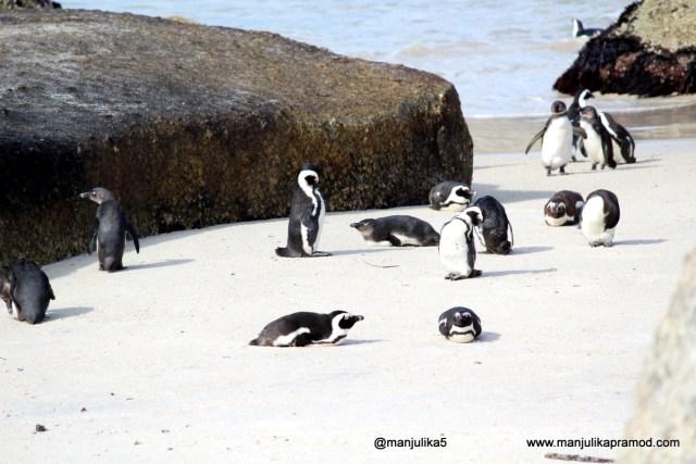Penguins Colony, Boulders Beach, Cape Town