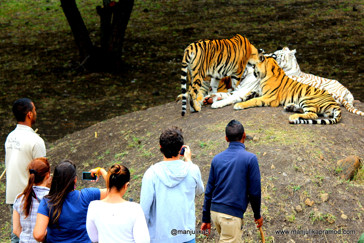 Big Cat, Mauritius, Travel Blogger
