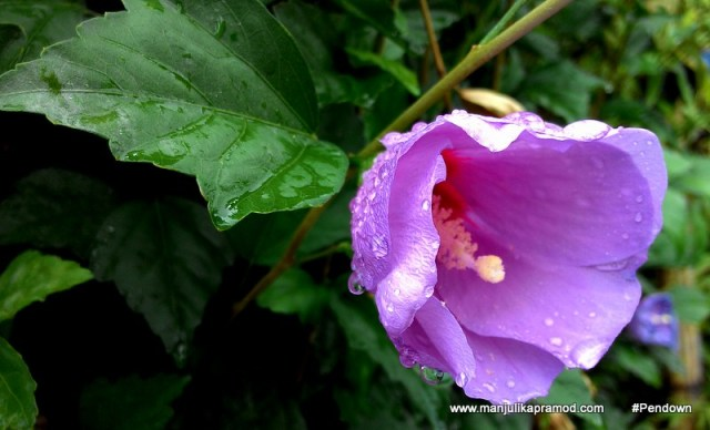 Flowers of Bhutan