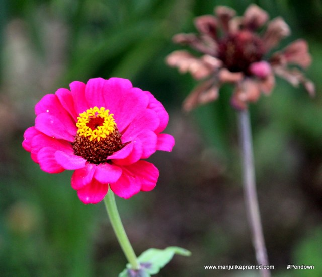 The fairest thing in nature, a flower, still has its roots in earth and manure. – D. H. Lawrence