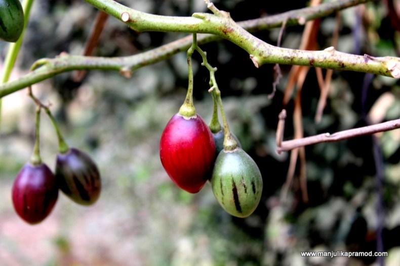 Fruits in the garden