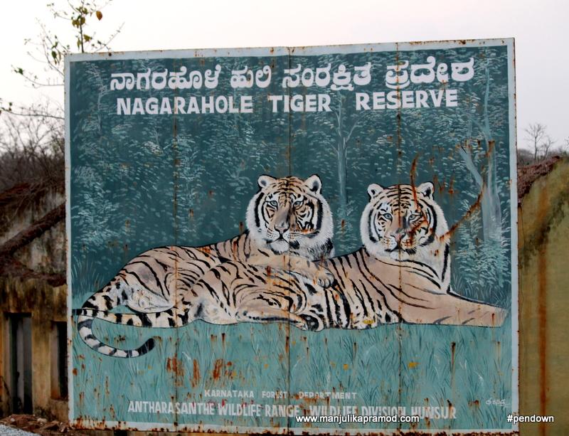 Wildlife sighting in India