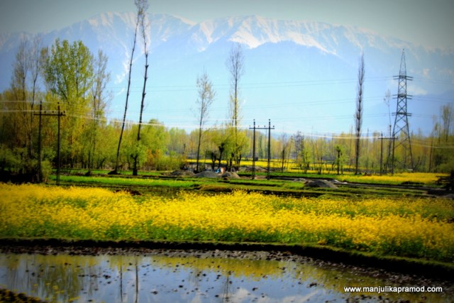 Picture perfect - Srinagar