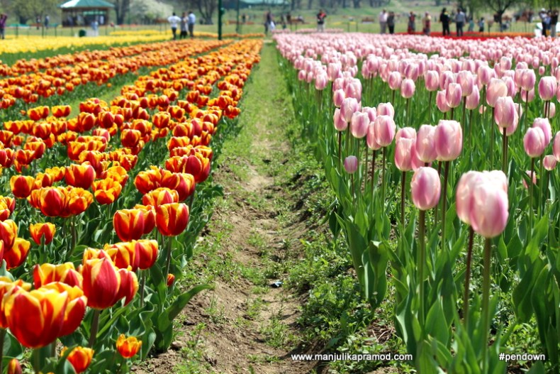Second best tulip garden of the World