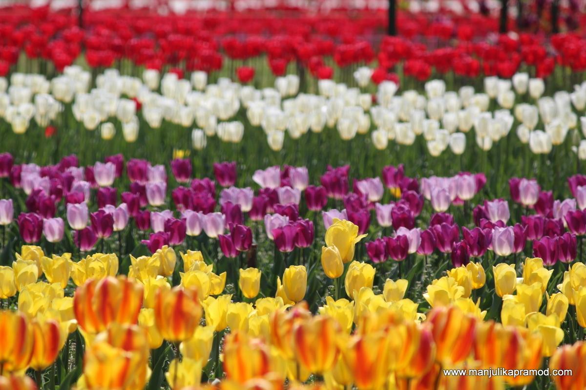 Festivals of India, Flowers