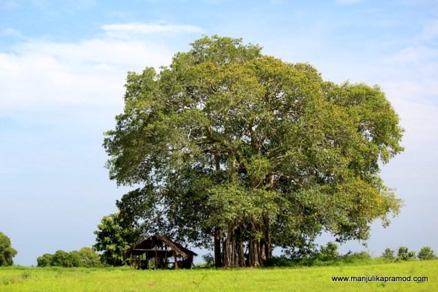 Wellawaya, Sri Lanka